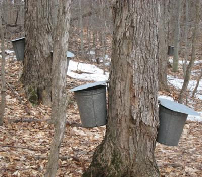c0ec73c74b3 Brian Chabot  Growth Potential of the Maple Syrup Industry in the Northern  Forest