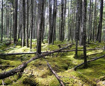Forest Habitat Type Affects Abundance of Invertebrate Food for ...