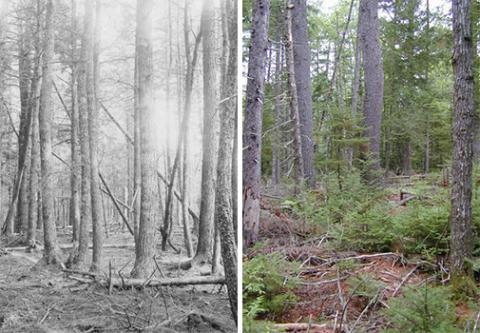 Comparison of forest stand 65 years ago with forest stand today