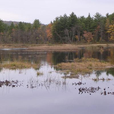 William McDowell: Suburbanization, Water Quality, and Property Values in the Northern Forest