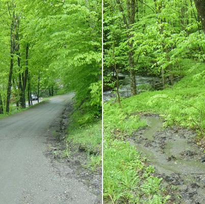 Leslie Morrissey: Assessing Road Impacts on Stream Stability and Health in Forested Watersheds