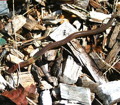Donald Ross: Earthworms and Land Use History Effect Soil Carbon Storage in the Northern Forest