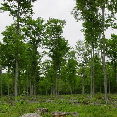 Paul Sendak: Current Use Taxation of Forest Land: Measures of Success