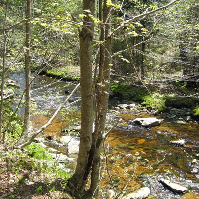 Pamela Templer: Nitrogen Deposition and Saturation in Wilderness Areas of the Northeastern United States