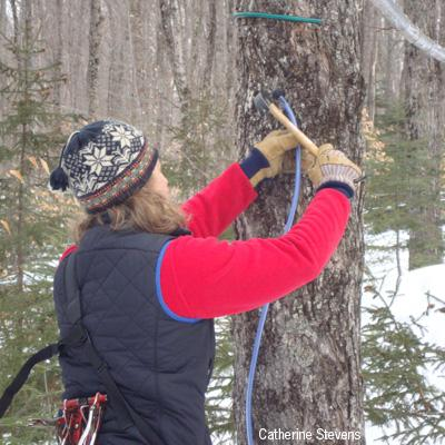Abby van den Berg: Sustainable Tapping Guidelines for Modern Maple Syrup Production