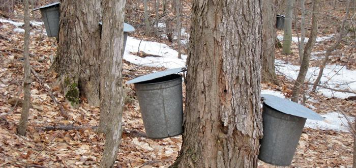 Sugaring in the Northern Forest region