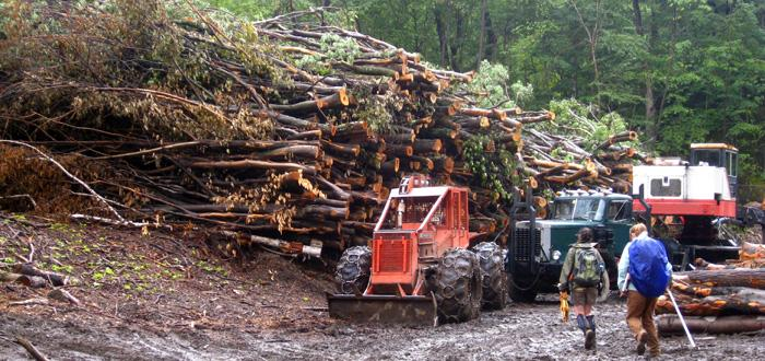 Researchers at timber harvest log landing