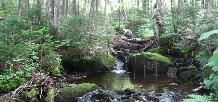 Stream research in New Hampshire