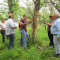 Five researchers and stakeholders examine a dead ash tree